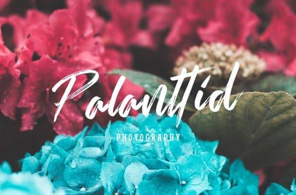 Download Rallifornia Brush Font font (typeface)