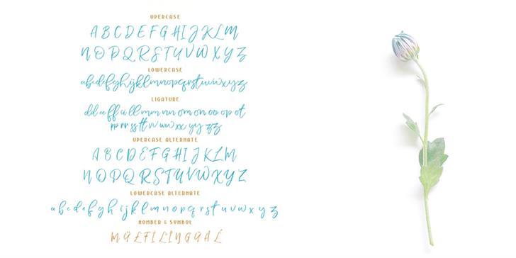 Download Nermola Script font (typeface)